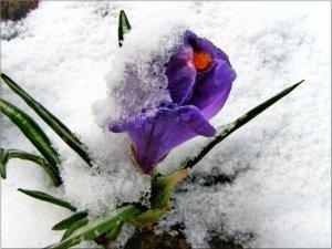 Загадки о весне для детей